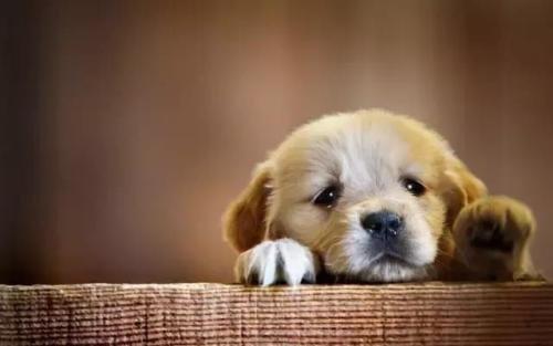 狗狗鼻炎有什么症状?狗狗鼻炎的原因及治疗方法